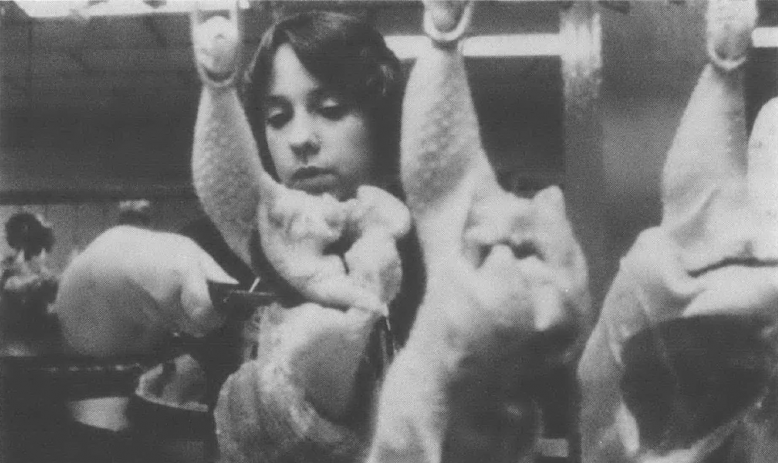 Black and white photo of white woman with scissors standing behind a line of raw, whole chickens hanging from hooks.